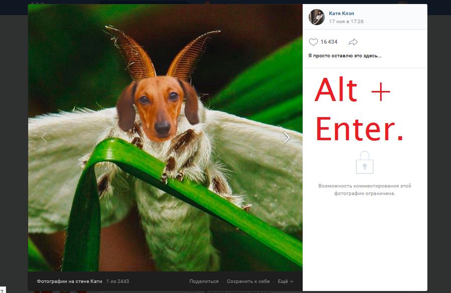 Слайд-шоу Вконтакте - просмотр всех фотографий без перелистывания
